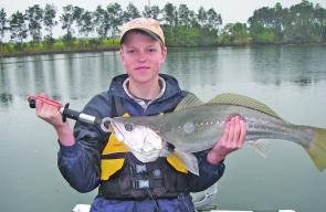 Will Duncan with what the Clarence River is famous for, a beautifully proportioned school mulloway.