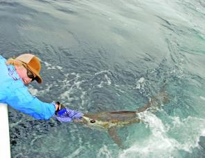 Tom wood releasing his first sailfish of the 2010 season. There are plenty out there at the moment.