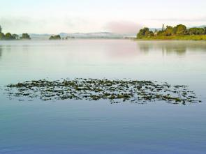 Lone 'islands' like this isolated clump of weed are sure to house a bass or two.