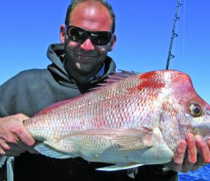 The crew at Fishing Offshore Noosa have caught plenty of quality snapper in recent weeks, such as this quality specimen.