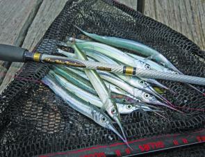 Fishing Monthly Magazines : Get into Garfish