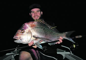 Snapper are a welcome by-catch when chasing mulloway at night.