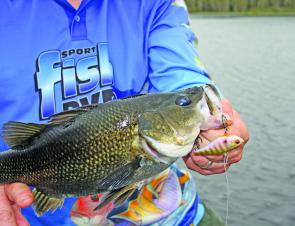 Fishing shallower water around schooling bass can often produce better quality fish.