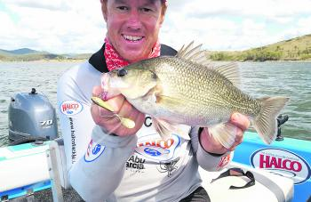 Somerset bass have been loving reaction style lures like the Jets 18g tail spinner.