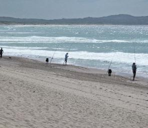 Whiting, bream and the odd salmon and tailor are being caught off the beaches at Cronulla.