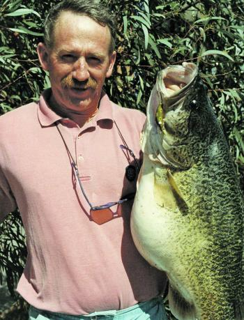 Murray cod stocked in food-rich waters develop rapidly. This one proved to have a stomach full of redfin and European carp.