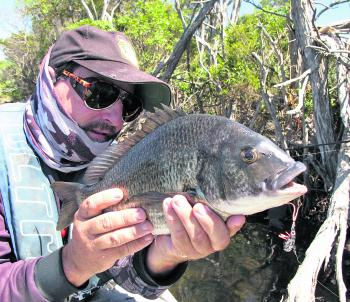Bream are happily taking blade lures at the moment and the hotspot is still here in the Mitchell River along the Silt Jetties.