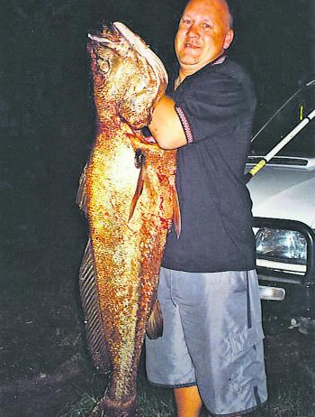 A massive mulloway – you can tell from the colour it's been up in the dirty river. Put in the time and you'll find one.