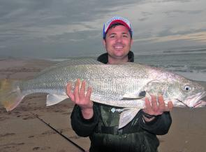 Dave Savage with a decent mulloway landed from the surf at Salt Creek. We prefer to leave the cod alone when the temperature is high.
