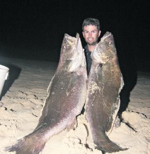 Double trouble. Ben doolan hidden behind a couple of monster beach mulloway.