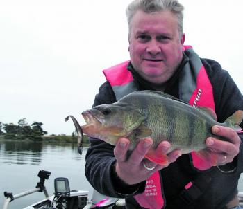 A better than average Purrumbete reddy taken jigging a Fish Arrow Flash J Huddle.
