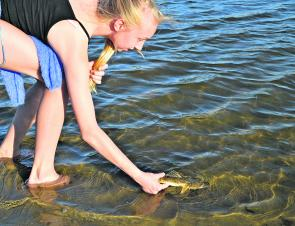 Charlotte Jung releasing a small flathead caught casting small hardbodied lures across the shallow sand flats.