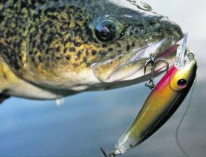 The Trigger series are great for both estuary and freshwater species.