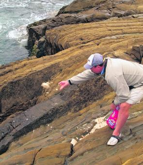 Simply soaking and mulching up some stale bread in a rock pool then distributing it by hand gets the job done beautifully!