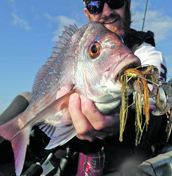 Snapper on spinnerbaits started off as an experiment by the author, but now it's his go-to method.