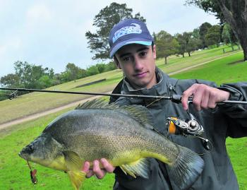 A fine example of a Melbourne golden perch.