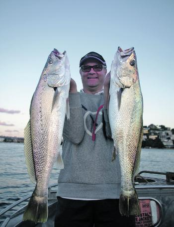 This is shaping up to be the best mulloway season ever.