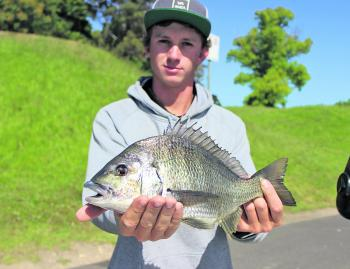 Bream are the hot catch around Lake's Entrance this month, with plenty around to catch.