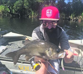 The bearded warrior pulled this perch up the river on a bent minnow –this is do or die fishing!