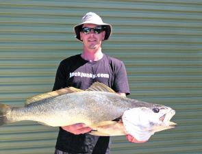 The author took this mulloway. The fish was hooked deep and was bleeding once netted, after many attempts to revive and release, it was instead taken for a feed. The fish took a large live bait and measured in at 98cm.