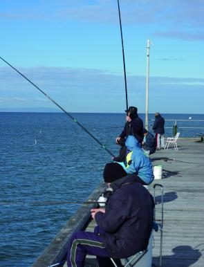 One of the good things about catching garfish is that you don't necessarily need a boat to be successful. There are plenty of good land-based spots, such as piers, all around the Bay.