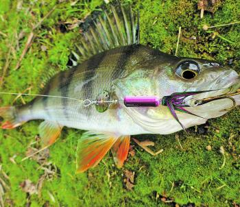The rainbow trout coloured Bling Spin has been a standout lure for the author's other half this season and not just the trout. Redfin are being caught on them as well.