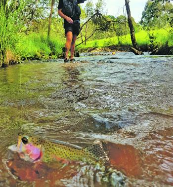 The trout fishing has been phenomenal so far this season, as Ross Virt can attest.