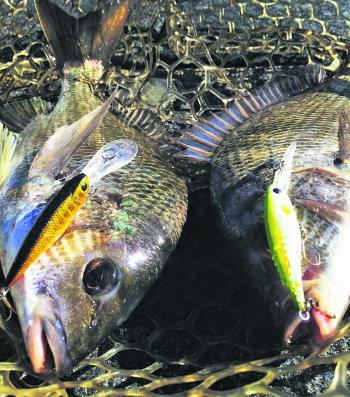 A pigeon pair of bream caught on Lucky Craft Bevy Shad 50FCs fishing the snags.