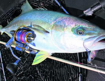 When it all comes together you can land very respectable kingfish on light micro-jigging tackle.