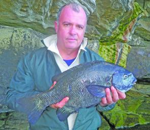 George Nikos with a personal best pig of 3.5kg, taken from The Hat at the Harbour entrance.
