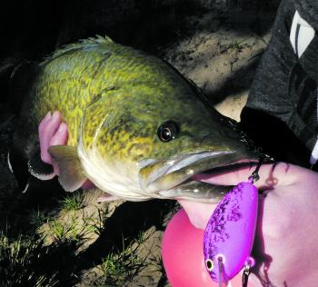 Handcrafted Aussie lures are irresistible to cod, as Hayley MacDonald found out.