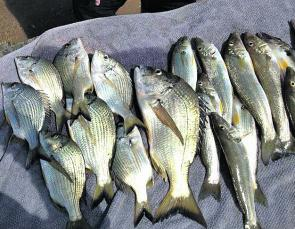 A good haul of bream and whiting.