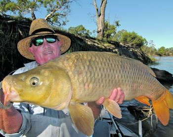 Some very big carp are on the bite in our local waters.