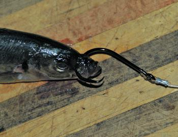 Fishing Monthly Magazines : Bluewater bait rigging