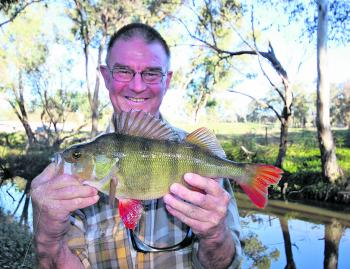Terry Alexander with a large redfin caught in the lower reaches of one of the regions small mountain streams.