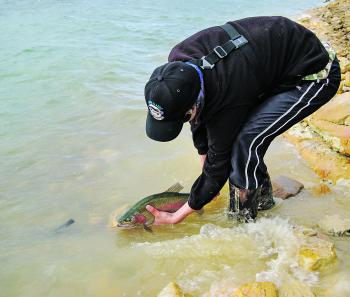 When fishing Thompsons Creek Dam with lures, wave action and lower light levels are just a few factors that can tip the balance in your favour.