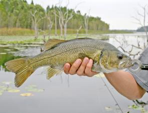Bass are a nude lure specialty.