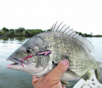 The author has watched Mick Dee pull in dozens of bream recently while he tricks just a few. Brett thought it was all about the lures Mick buys, but then Mick tied on his homemade blades and started getting twice as many. Please explain!