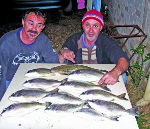 A good haul of decent-sized bream, and a flathead, all caught using live bait.