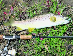 May is a great time to target trout around Apollo Bay. A wide variety of bait and lures can be used but small soft plastic baitfish imitations are my go-to lure at this time of year.