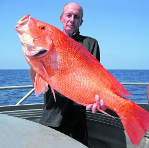 A beautiful scarlet sea perch – they are quite active at this time of year.