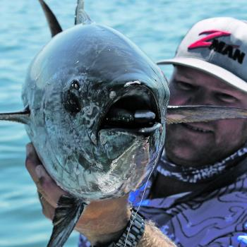 Longtail tuna will be around the southern bay this month.