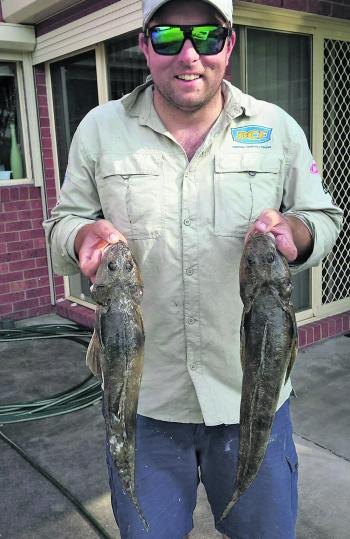 Pete Moretti with a couple of big flathead from Mcloughlins caught on soft plastics.