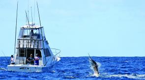 Billfish leaping for freedom! (photo by Kellie Jensen)