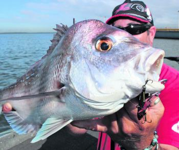 Vibration baits are a fantastic option for the Brisbane River's population of resident snapper.