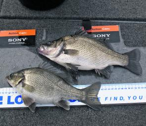 Bass and estuary perch together so you can see the difference. That's the EP at the top.