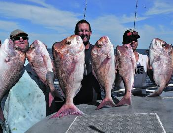 We have been catching heaps of quality snapper at Rainbow Beach.