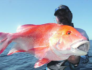 Alan Bishop of Renegade displaying a quality size red emperor. There should be plenty on offer this month!