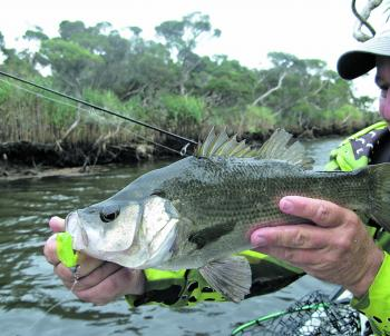 Around 80% of the author's EPs are taken on soft plastics and 90-100mm shads or grubs work a treat.