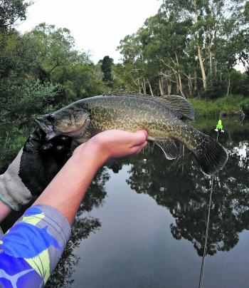 A beautifully marked Murray cod caught in spectacular surrounds.